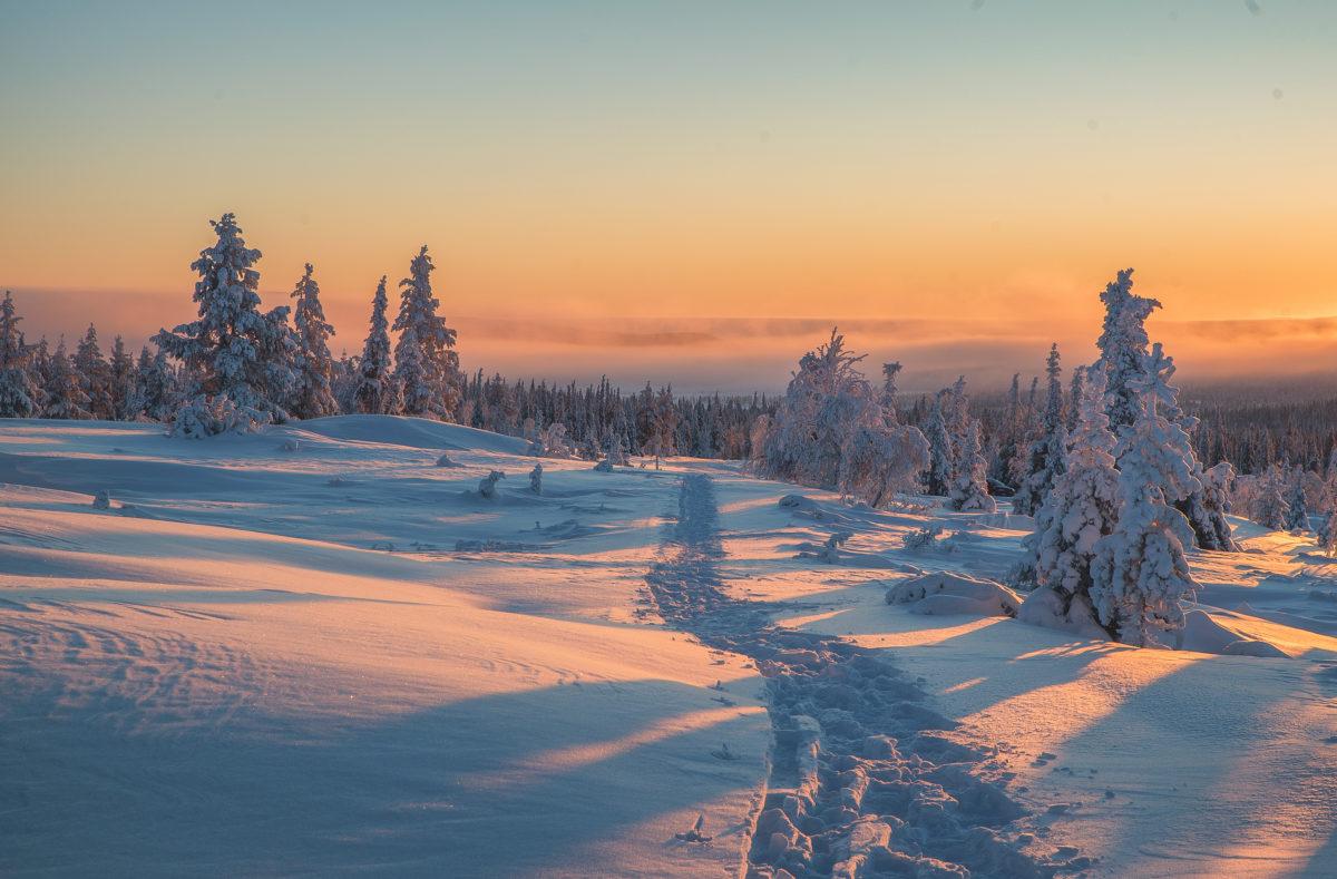 Aventure arctique en Laponie finlandaise