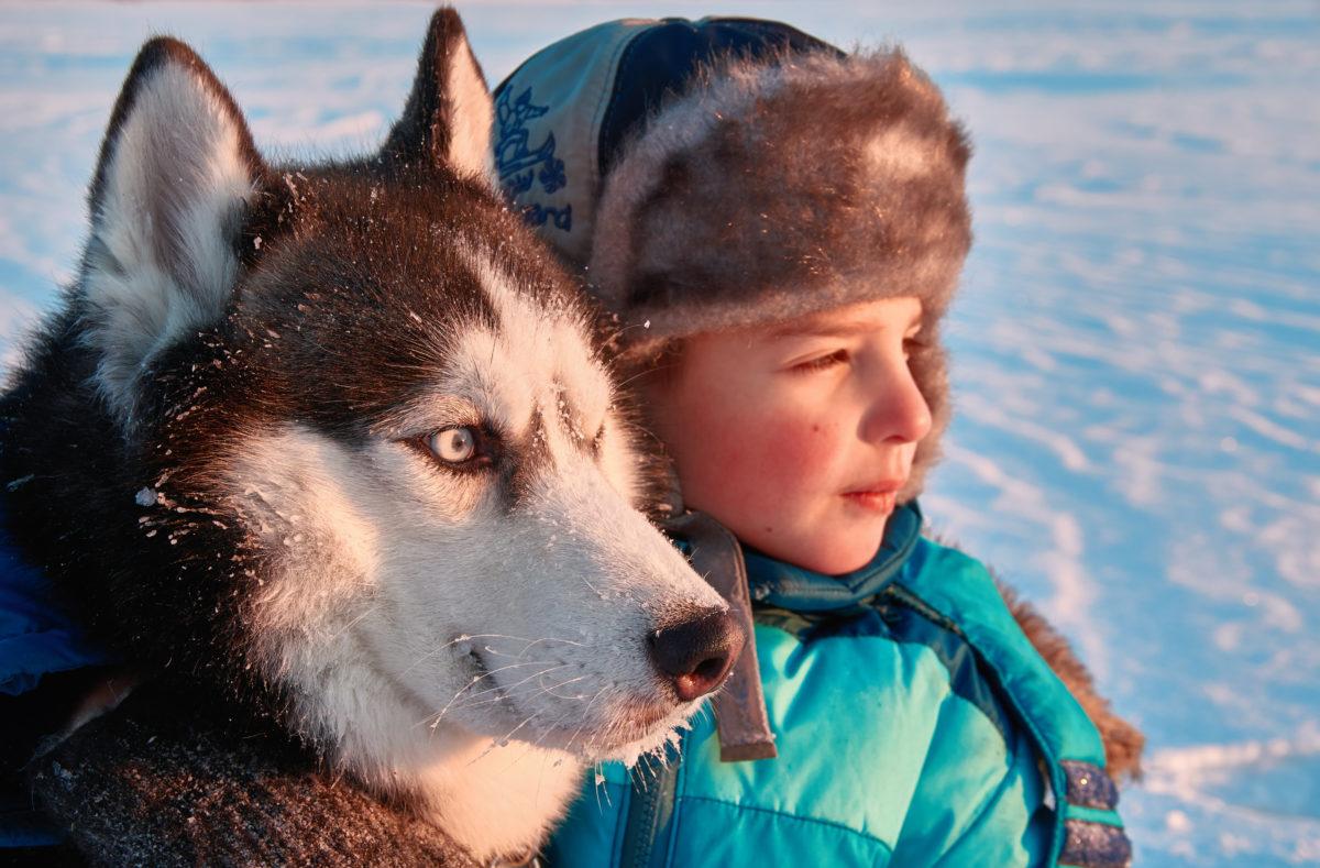 Excursion en chiens de traineau en Laponie finlandaise