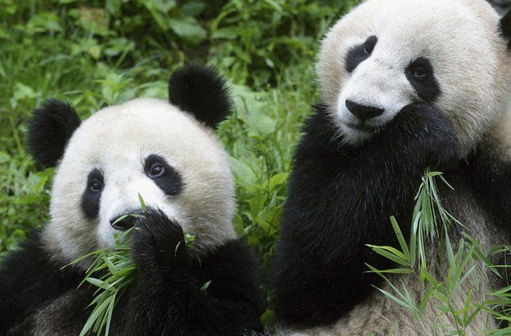 Visiter le Yunnan et voir les Pandas à Chengdu