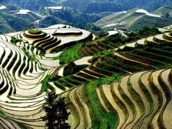 Visiter le Yunnan et les rizières en terrasse