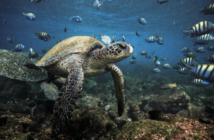 Visiter l'Equateur et snorkeler avec les tortues marines aux Galapagos