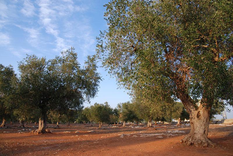 Découvrir une ferme viticole avec un voyage en groupe en Sicile