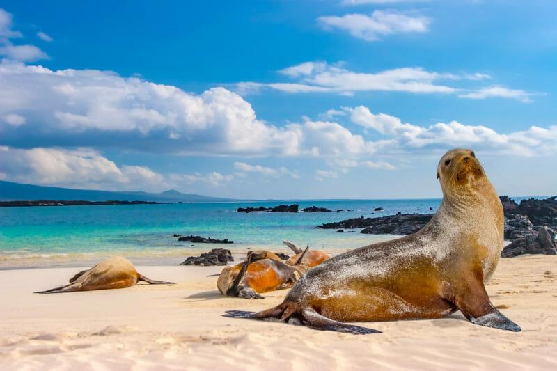 Phoques sur les îles Galapagos à visiter en groupe organisé