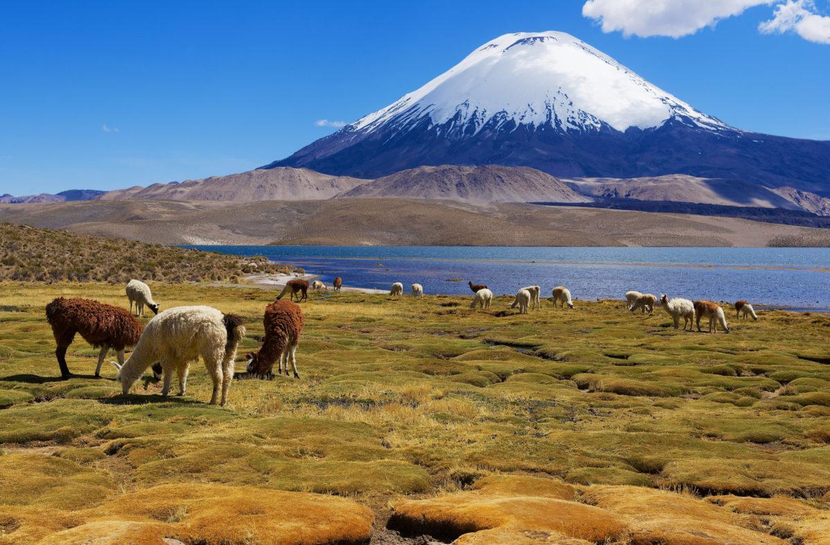 Voyage en groupe à San Pedro de Atacama Chili