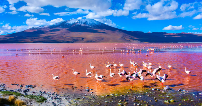 Voyage en groupe à Laguna Colorada Uyuni Bolivie