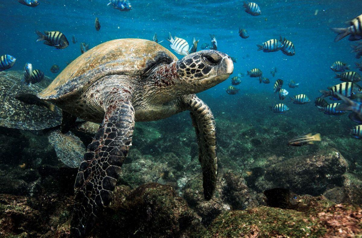 Voyage en groupe aux Galapagos