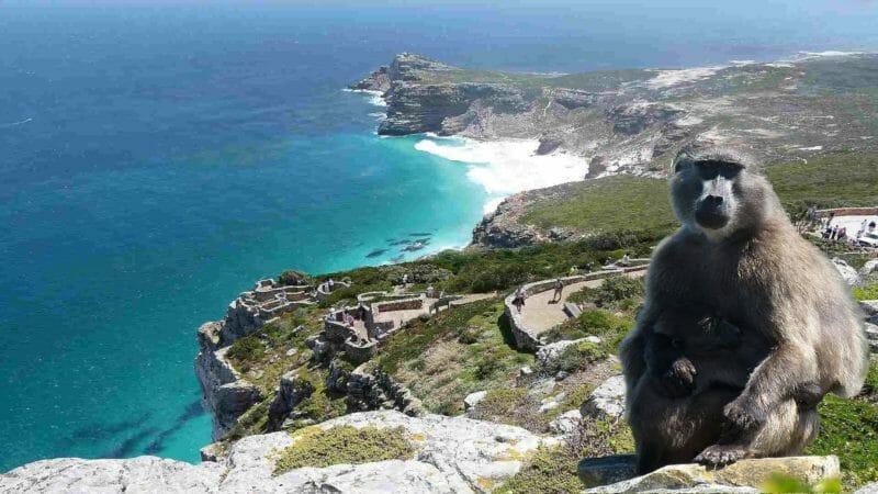 Cap de Bonne-Espérance à visiter en voyage organisé en groupe