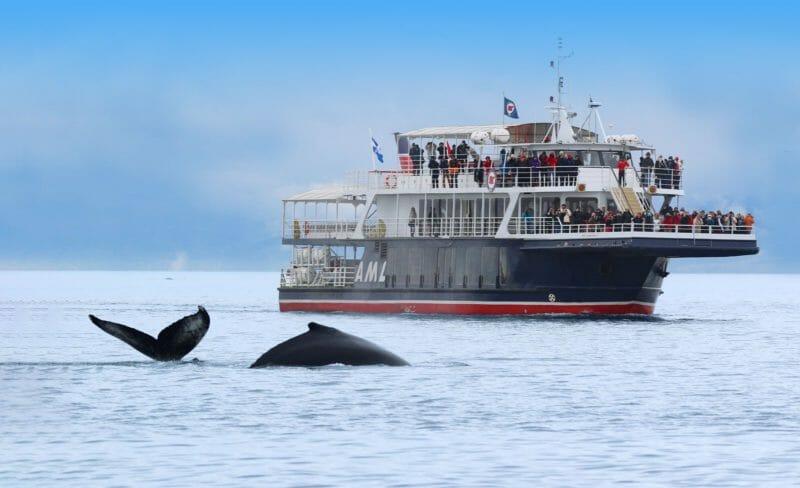 Baleines de Tadoussac en voyage organisé au Québec en automne