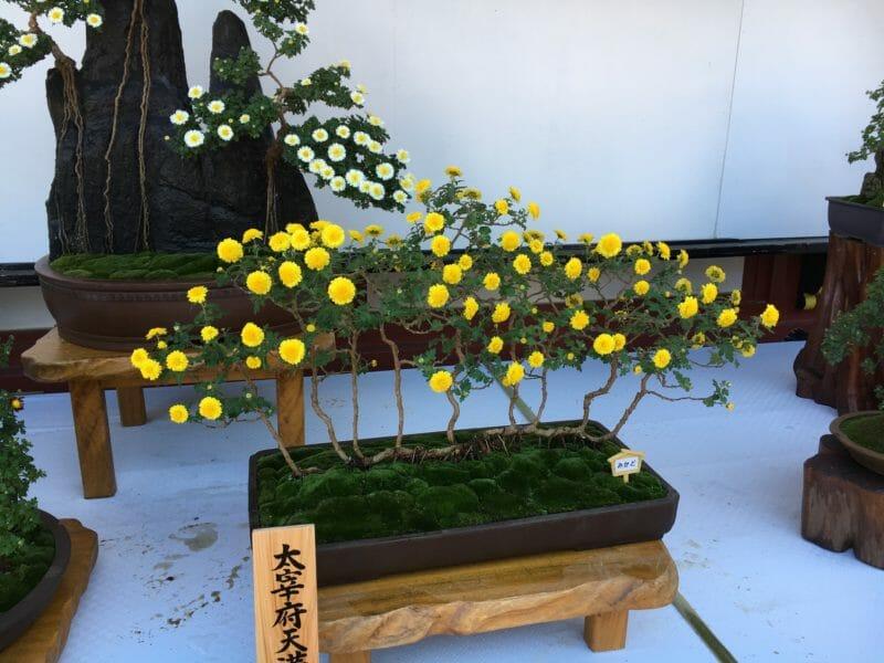 Voyage en groupe au Japon en automne