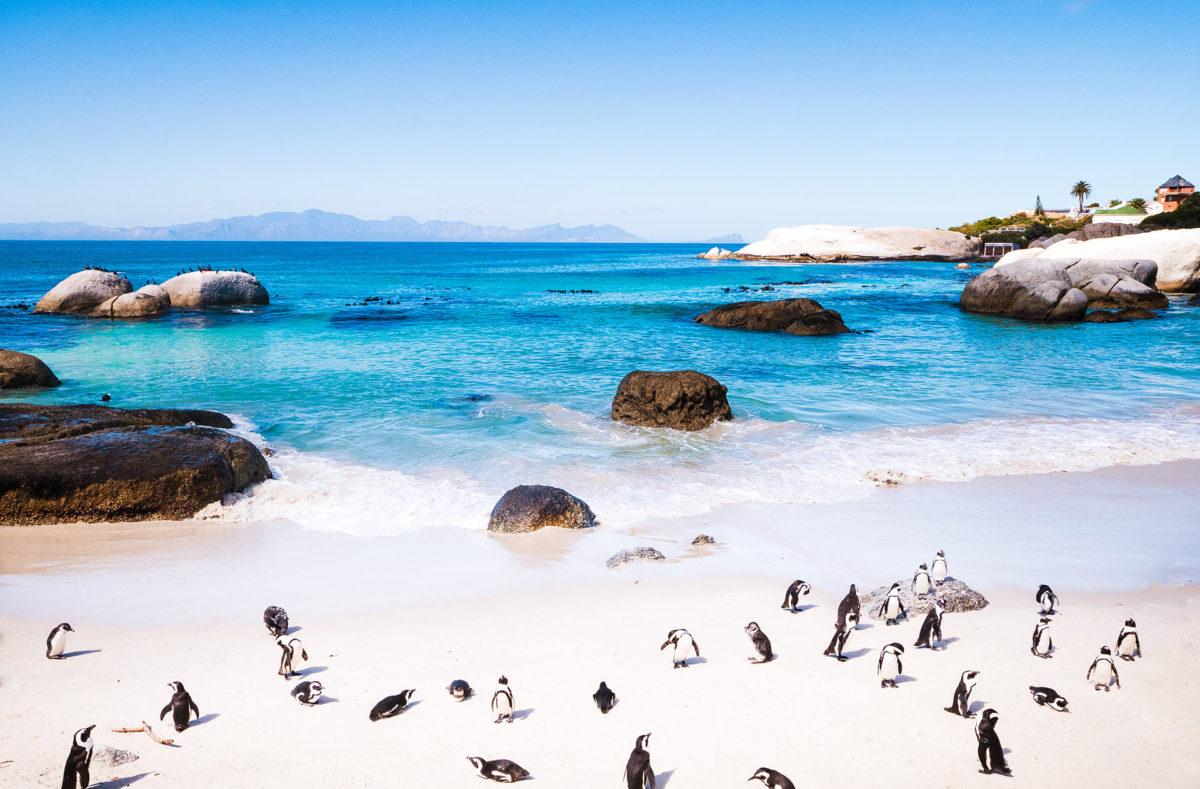 Voir les manchots à Boulders Beach en voyage en groupe Afrique du Sud