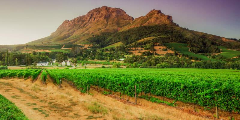 Visiter Stellenbosh en voyage en groupe en Afrique du Sud