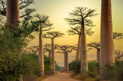 Circuit organisé Madagascar au milieu des baobabs