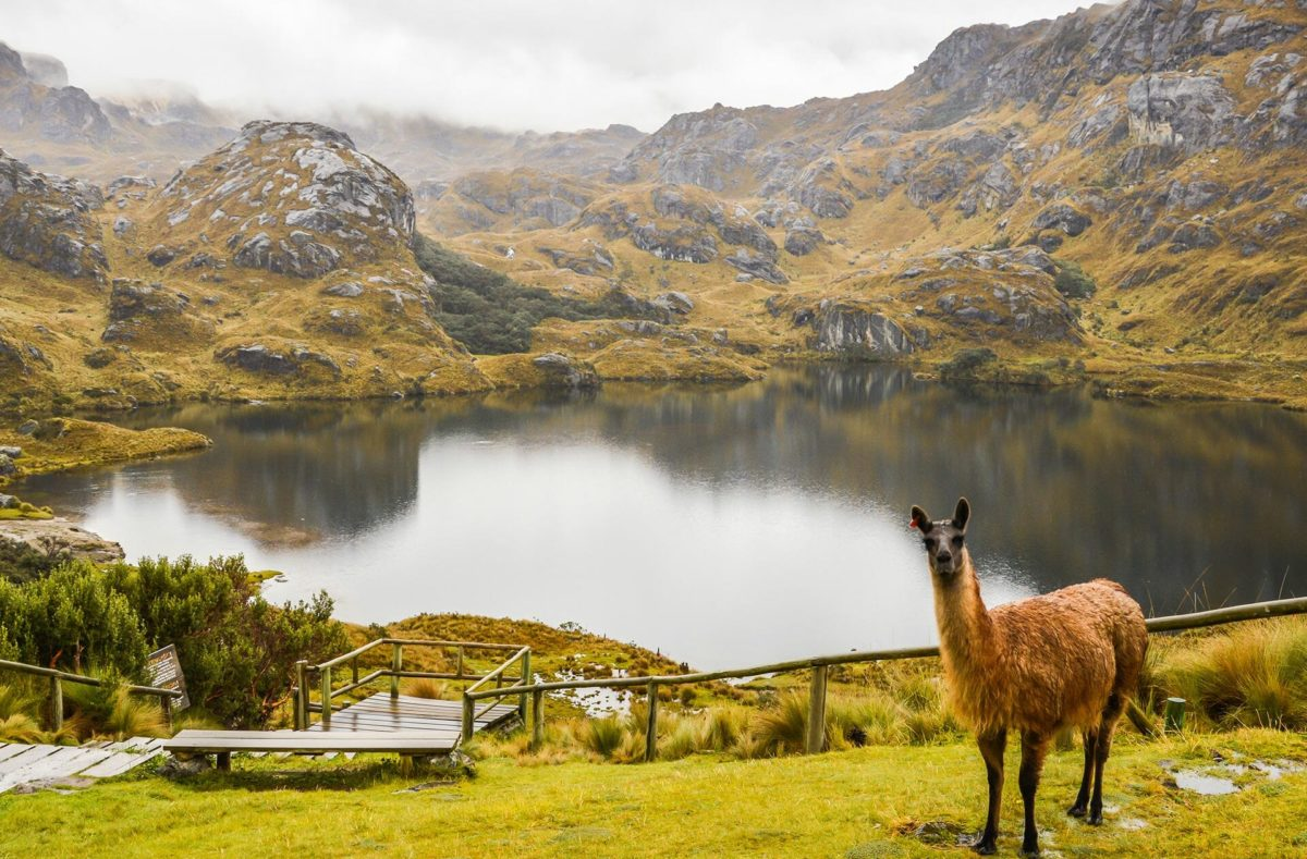 Visiter en groupe le Parc national de Cajas Equateur