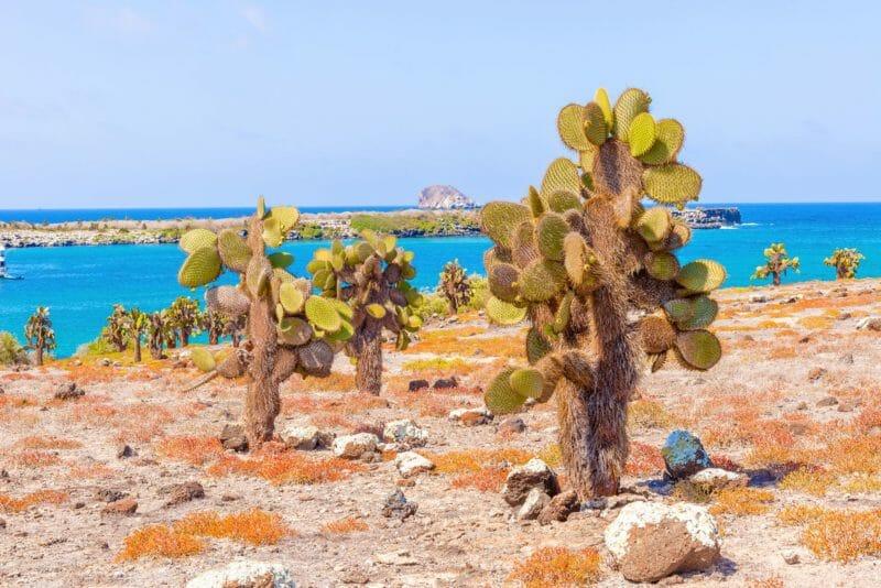 Voyage en groupe à Santa Fe Galapagos