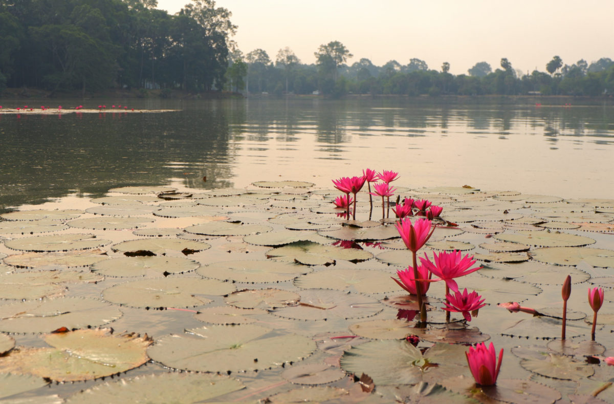 Visite en groupe du Cambodge et Sud Vietnam