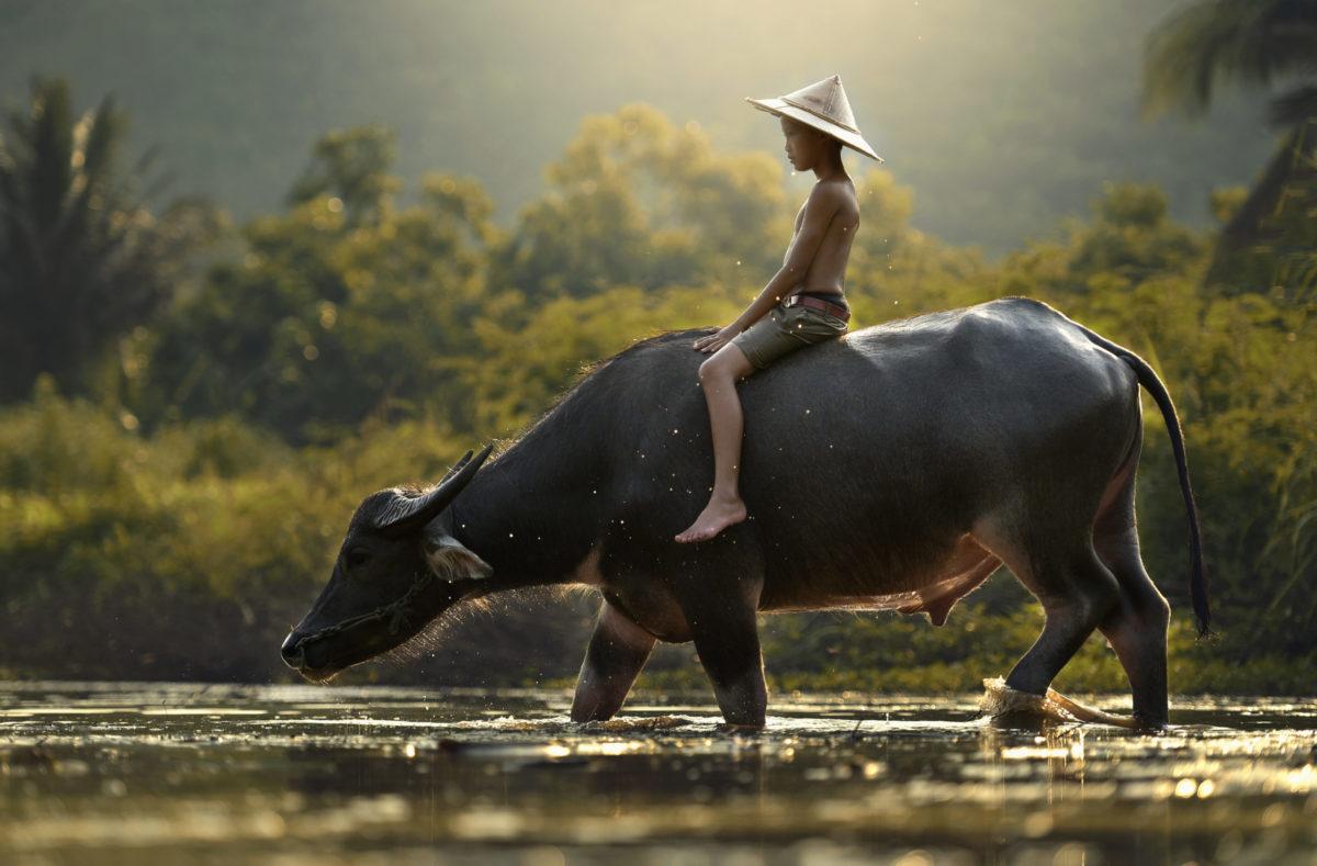 Culture au Sud Vietnam et Cambodge