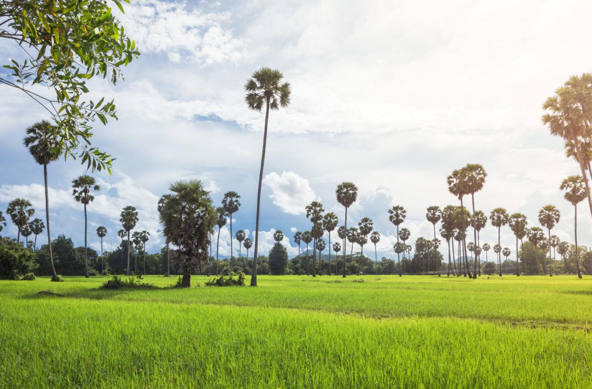 Voyage en groupe dans la nature du Sud Vietnam et Cambodge
