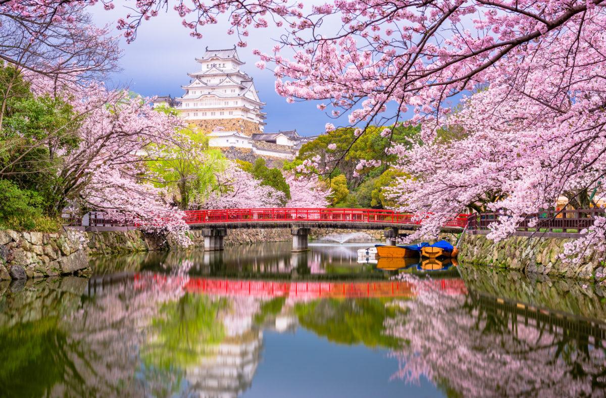 Himeji, au Japon, au château de Himeji, près des douves au printemps