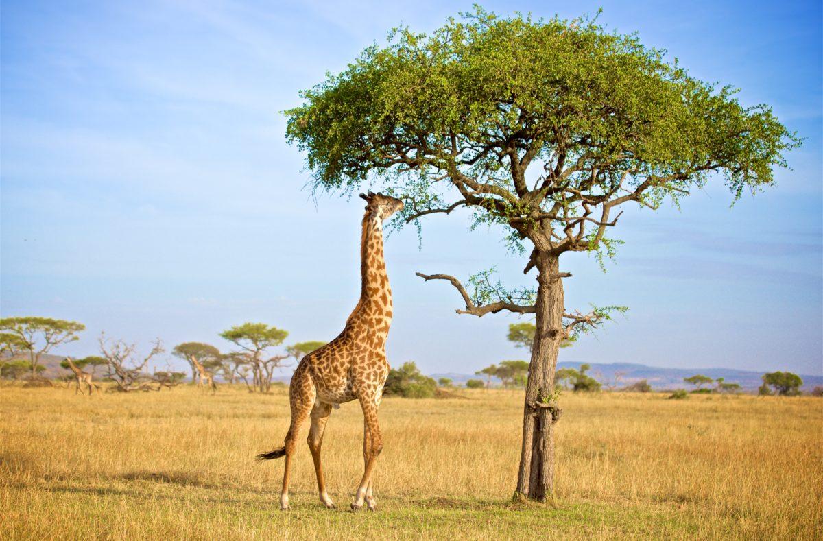 Visiter la réserve de Grumeti en Tanzanie