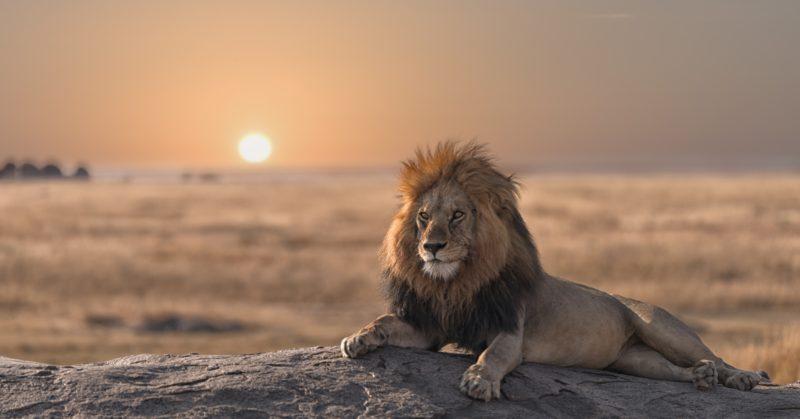 Voyage en groupe en Tanzanie à la découverte des animaux