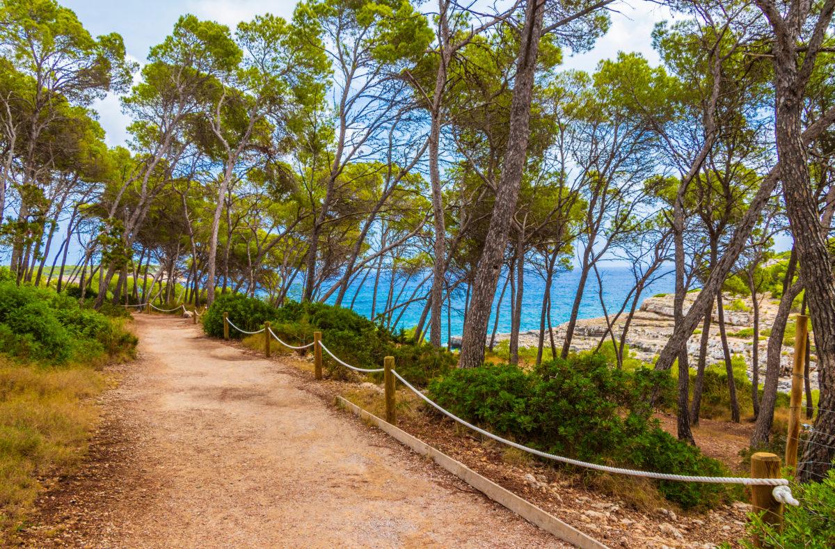 Chemin de randonnée naturel dans la forêt du Parc naturel de Mondragó Cala Mondrago