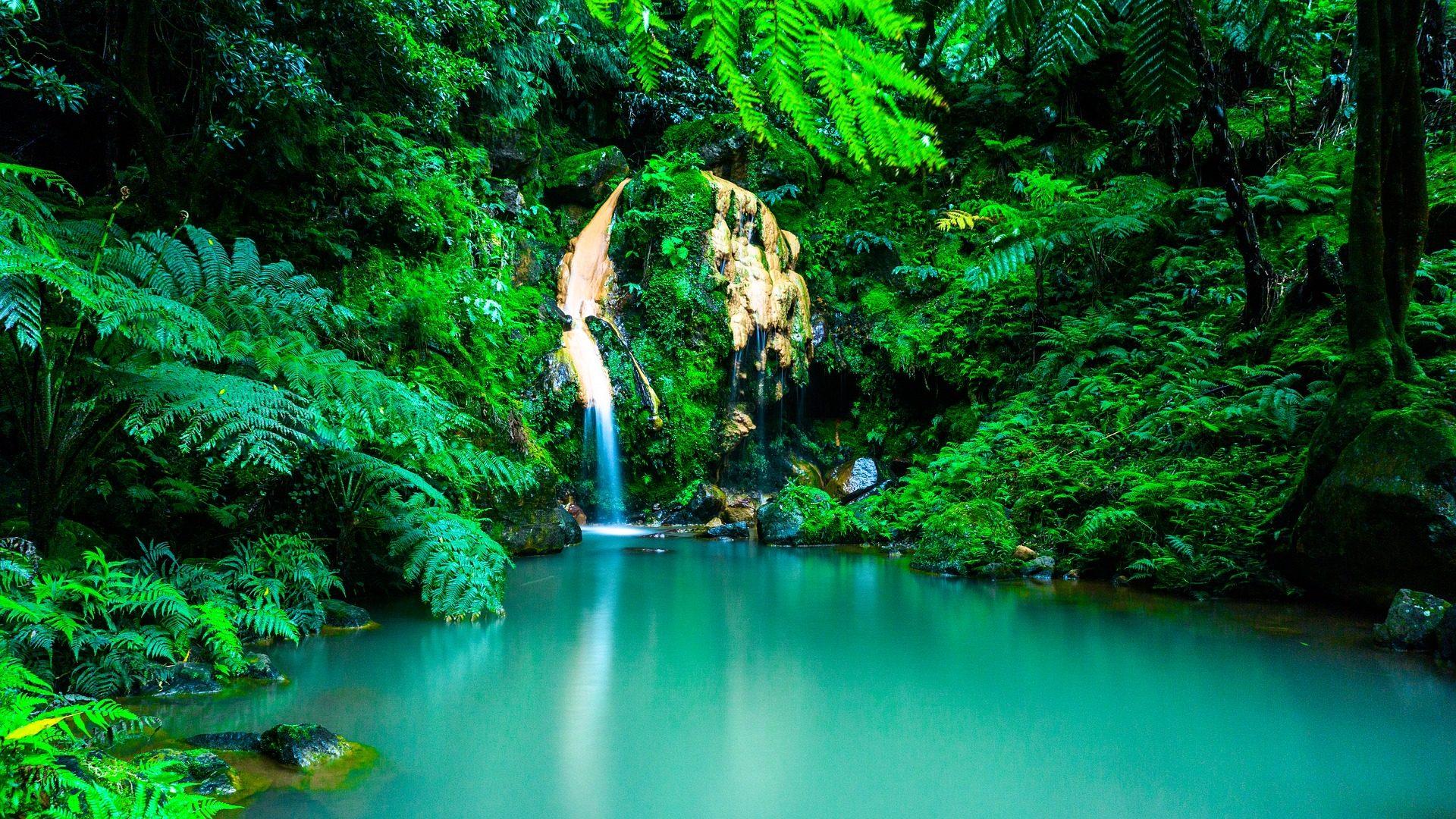Découvrir la végétation luxuriante lors d'un voyage aux Açores