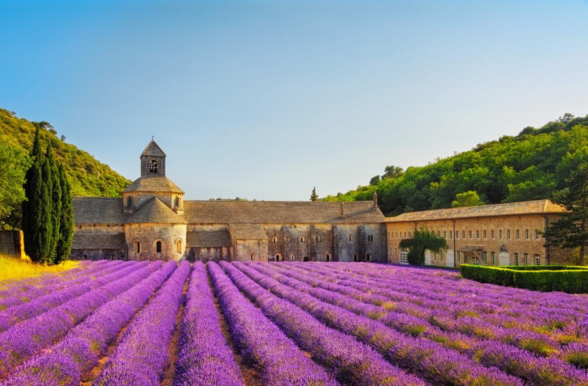 Abbaye de Senanque et son champs de lavande Vaucluse France
