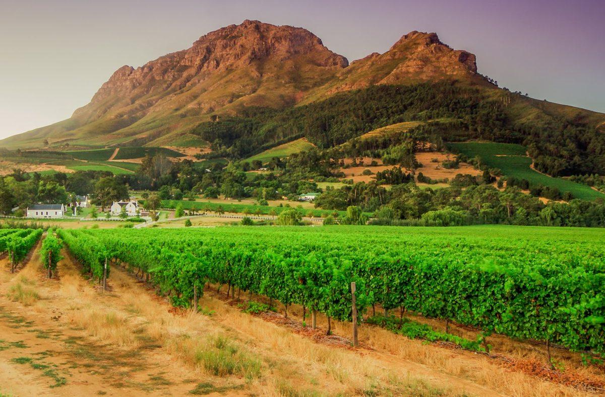 Stellenbosch Afrique du Sud
