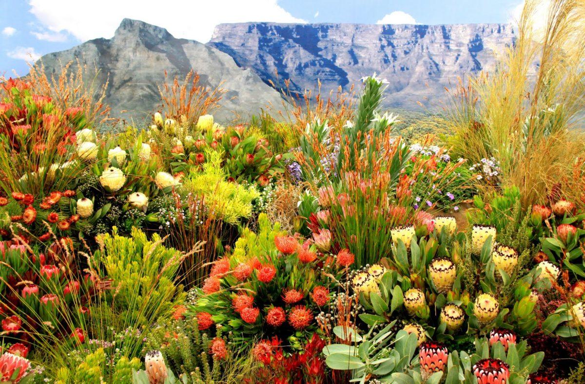 Jardin botanique de Kirstenbosch, Afrique du Sud