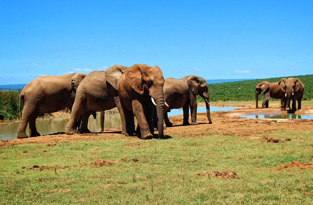 Parc national Kruger, éléphants