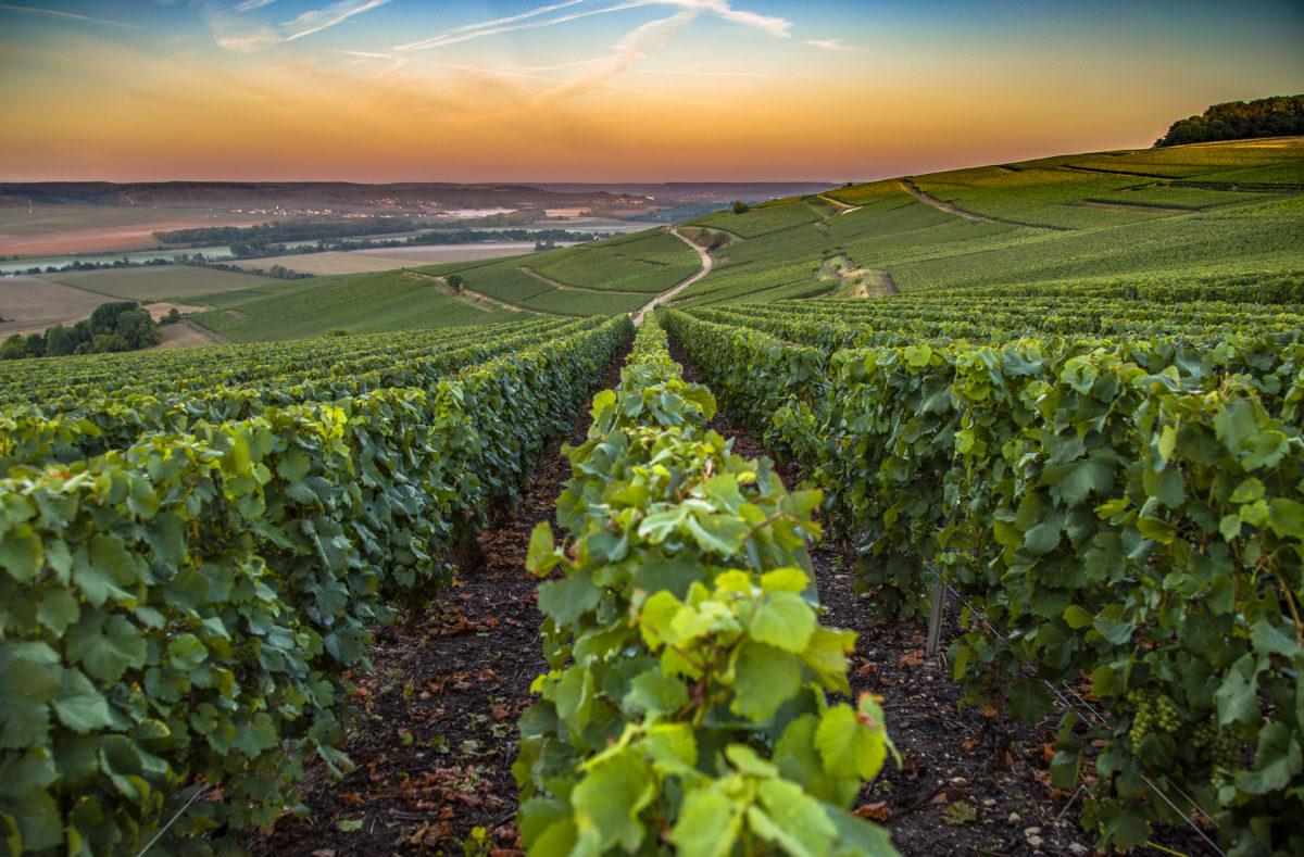 Région de Champagne en France
