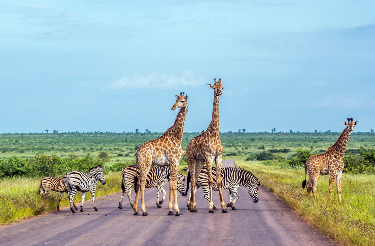 Parc national Kruger, zèbres et girafes